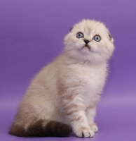 Eragon King Cats