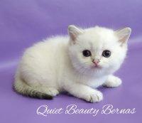 Quiet Beauty